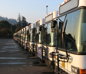 buses-in-a-row-morning-light